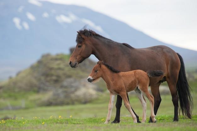 Égua e potro em um prado