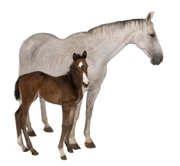 Égua e seu pé de potro