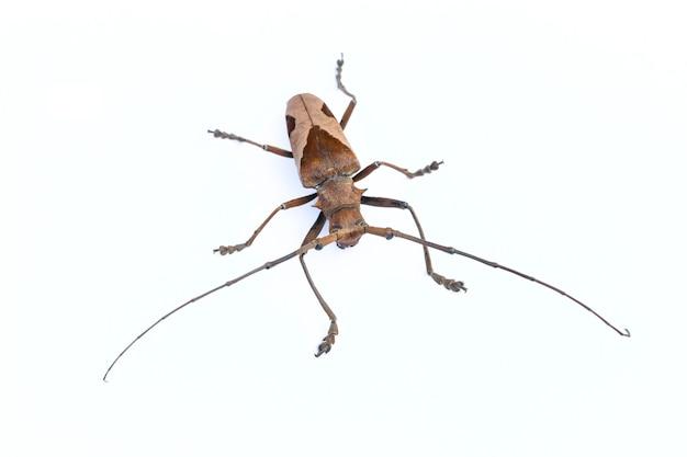 Ele insetos