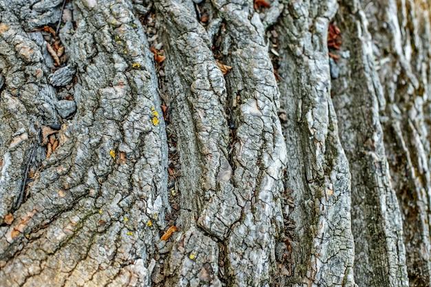Ele latiu de uma velha árvore. fundo e textura do conceito