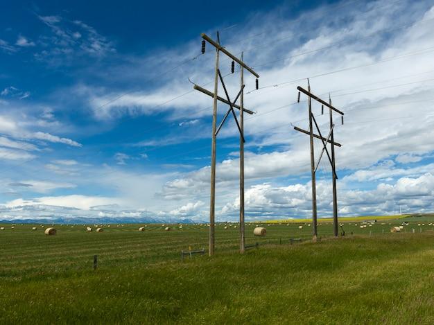 Electricidade, pilões, ao longo, terra cultivada, pincher, riacho, sulista, alberta, alberta, canadá
