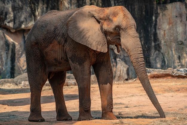 Elefante, a, grande vida selvagem