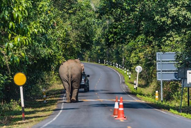 Elefante asiático selvagem na estrada no parque nacional de khao yai, tailândia