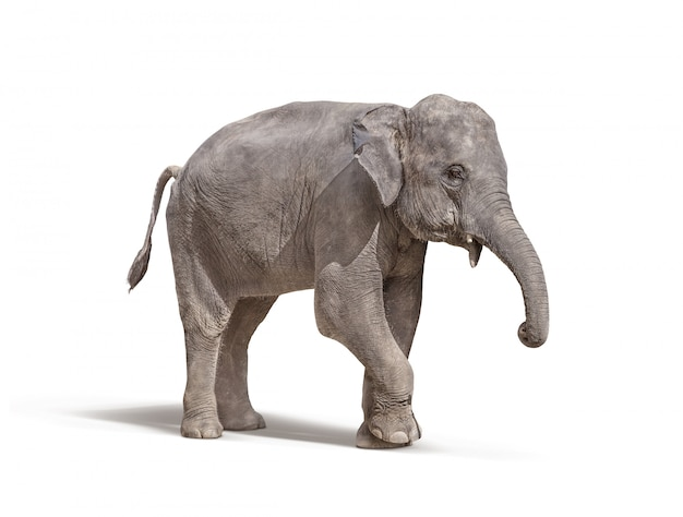 Elefante, com, fora, presa, isolado, branco