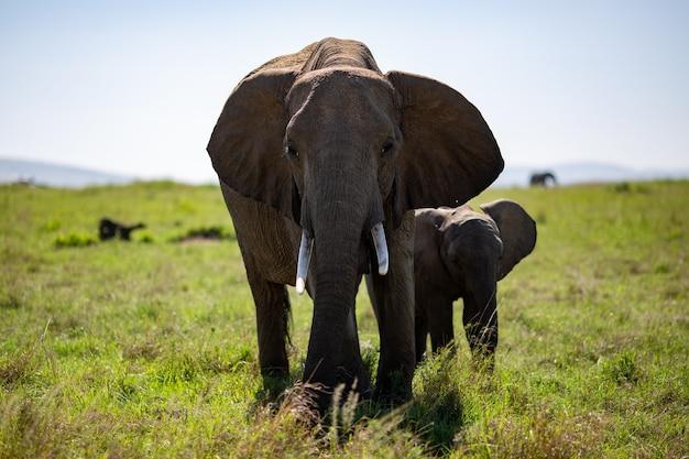 Elefante com um filhote em um campo verde de árvores