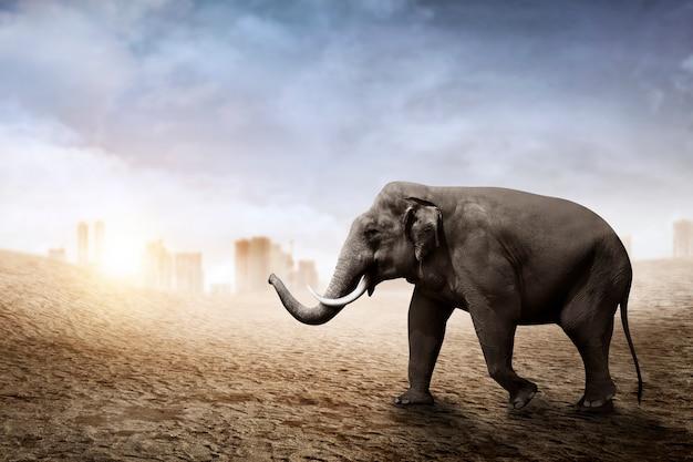 Elefante de sumatra andar no deserto