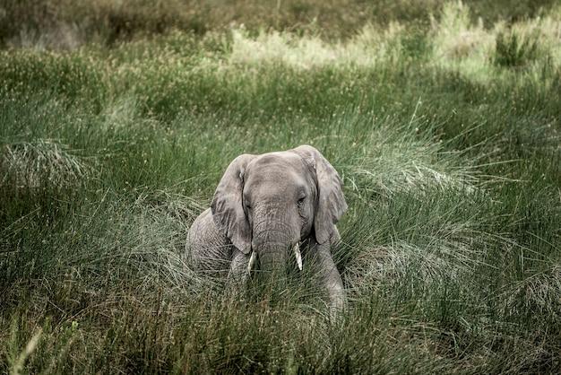 Elefante deitado no parque nacional do serengeti