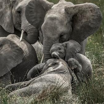 Elefante e filhote no parque nacional do serengeti