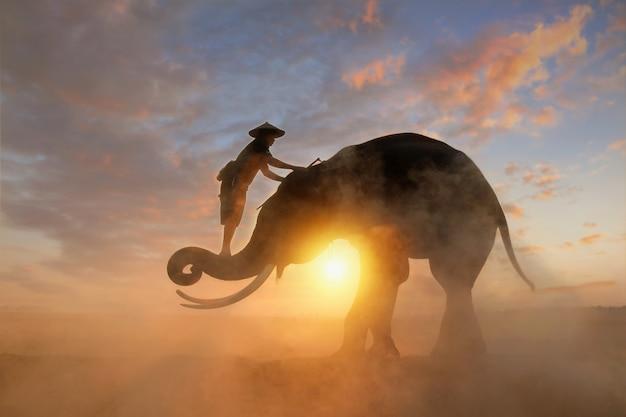 Elefante e mahous durante o nascer do sol, surin, tailândia