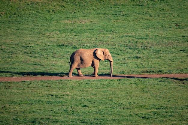 Elefante macho incrível no prado