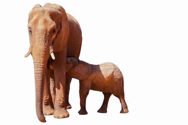 Elefante mãe e filho em um fundo branco.