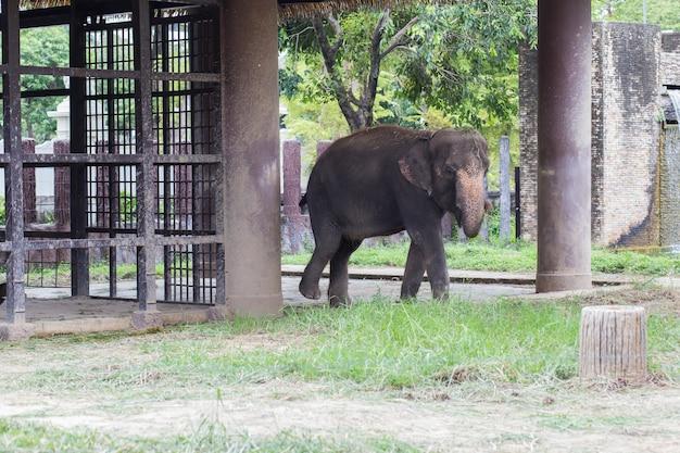 Elefante no jardim zoológico do dusit, tailândia.