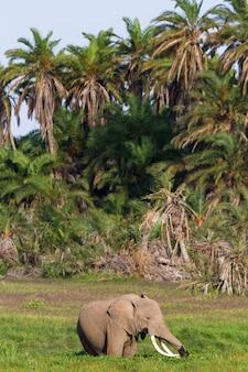 Elefante no pântano verde do quênia