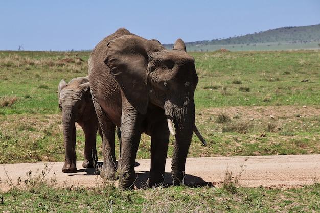 Elefante no safari no quênia e na tanzânia, áfrica