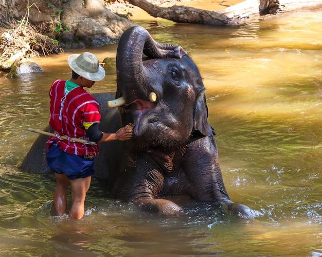 Elefante tailandês foi tomar banho com mahout no acampamento de elefante maesa