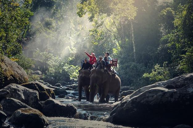 Elefante, trekking, através, selva, em, norte, laos