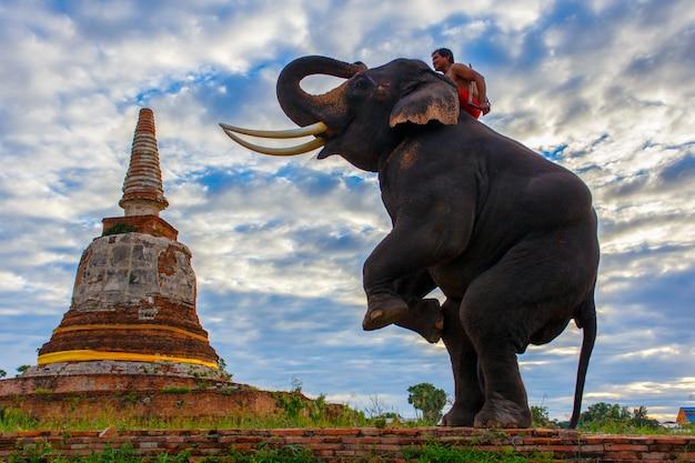 Elefantes e stupa em ayutthaya na tailândia