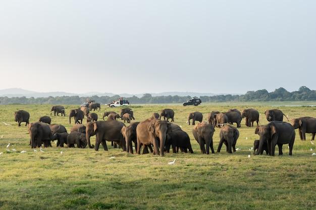 Elefantes selvagens em uma bela paisagem no sri lanka