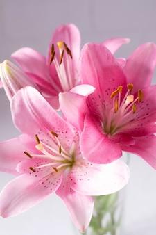 Elegantes lindas flores cor de rosa, lírios close-up em branco