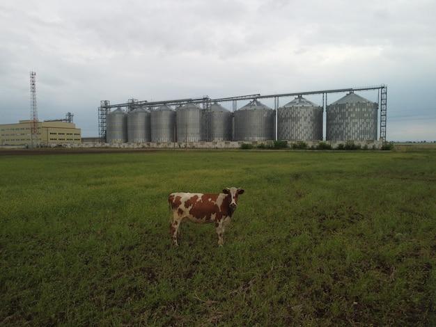 Elevador de grãos elevador metálico de grãos na zona agrícola, armazenamento agrícola para colheita de grãos