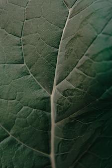 Em detalhe planta padrão closeup