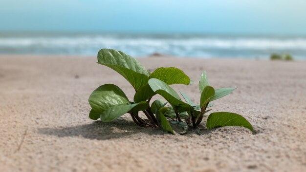 Em foco seletivo de pequena planta no fundo da praia