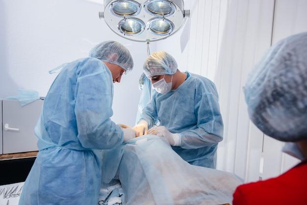 Em uma clínica veterinária moderna, uma operação é realizada para salvar a vida de um cão grande. cirurgia e medicina.