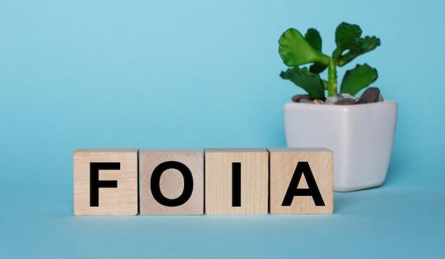 Em uma parede azul, em cubos de madeira perto de uma planta em um vaso foia o ato de liberdade de informação foia em uma mesa está escrito
