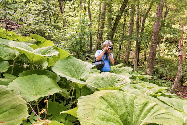 Em uma pitoresca floresta antiga, um fotógrafo turístico captura uma natureza única
