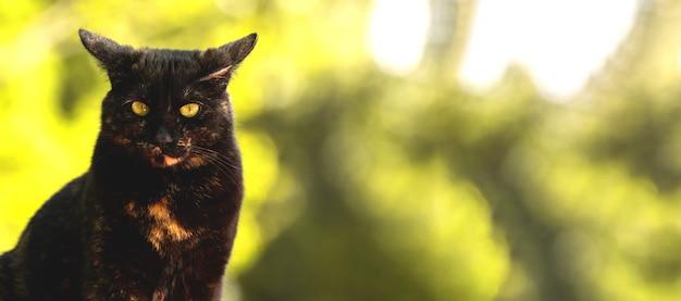Emoções de gato pensativo, banner sério de gato de rua em uma foto de fundo amarelo da natureza