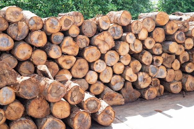 Empilhe estoque de toras de tronco de árvore de madeira na floresta, pilha de madeira ou armazenamento de lenha para restaurante ou indústria.