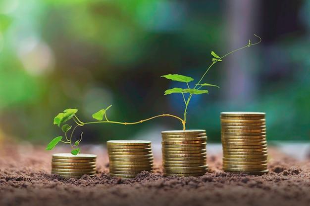 Empilhe moedas com o crescimento da planta como etapas o conceito de crescimento do negócio