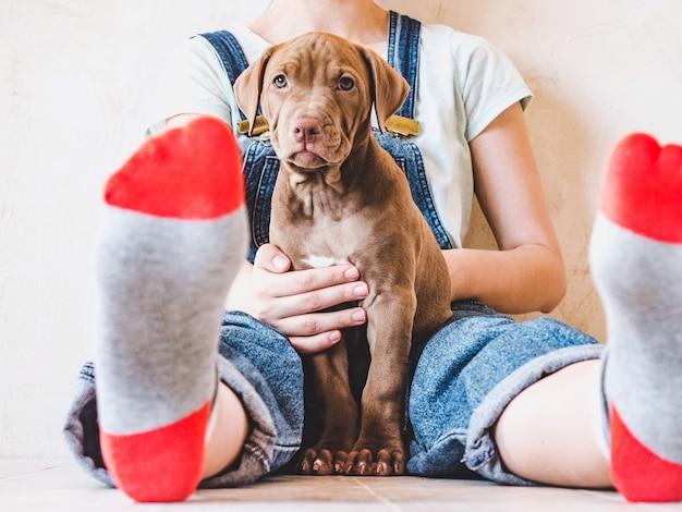 Encantador, adorável cachorrinho de cor marrom e uma linda mulher.