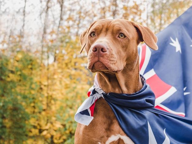 Encantador e adorável cachorrinho de cor marrom.