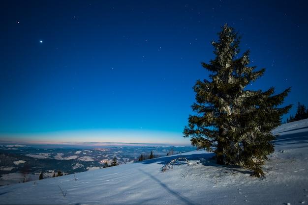 Encantadora paisagem mágica de altos pinheiros nevados em um céu azul estrelado