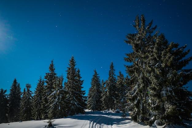 Encantadora paisagem mágica de pinheiros nevados