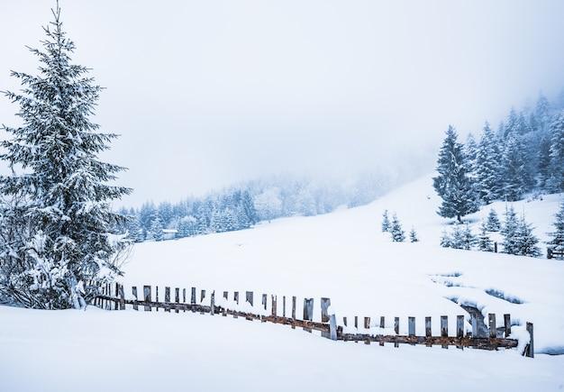 Encantadora paisagem pitoresca de inverno com grandes montes de neve de um rio fluindo entre eles contra uma superfície de altos abetos e névoa branca em um dia nublado e gelado de inverno