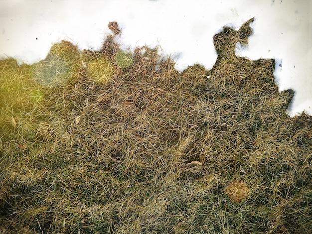 Encontrando neve branca e grama verde perto - entre o fundo do conceito de inverno e primavera. imagem conceitual sobre a primavera. foco seletivo. fundo com espaço de cópia. vista do topo.