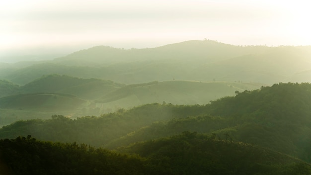 Encosta da montanha arborizada na nuvem baixa, com as coníferas sempre verdes envoltas em névoa em uma paisagem vista