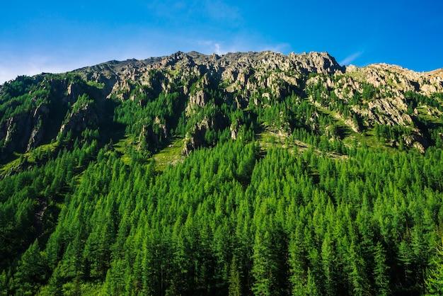Encosta da montanha gigante com floresta de coníferas em dia ensolarado. textura das partes superiores das árvores coníferas na grande montanha na luz solar. penhasco rochoso íngreme.