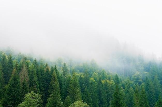 Encostas de montanha, floresta, colinas, névoa da manhã