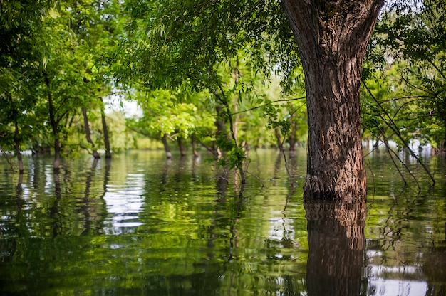 Encostas verdes de montanhas, reflexos de árvores no lago