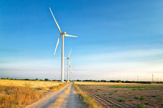 Energia eólica. campo de trigo e céu azul