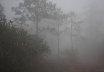 Enevoado na floresta asiática na temporada de inverno
