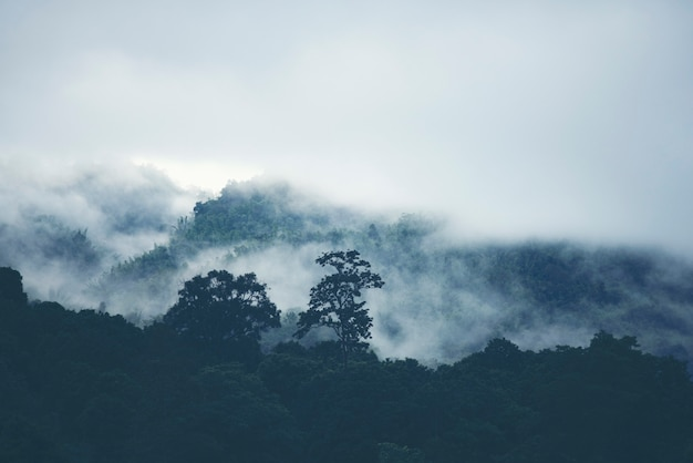 Enevoe na montanha na floresta tropical de tailândia.