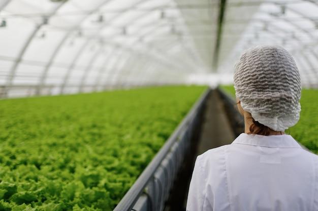 Engenheira de biotecnologia examinando planta em busca de doenças