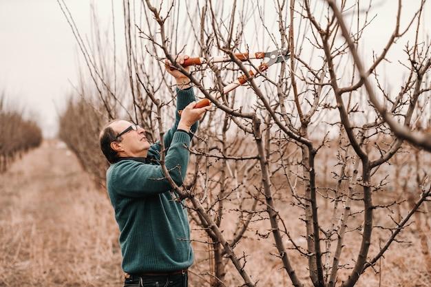 Engenheiro agrônomo caucasiano com óculos podando a árvore de fruto no pomar.