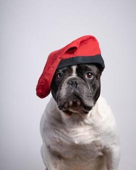 Engraçado buldogue francês com tampa vermelha