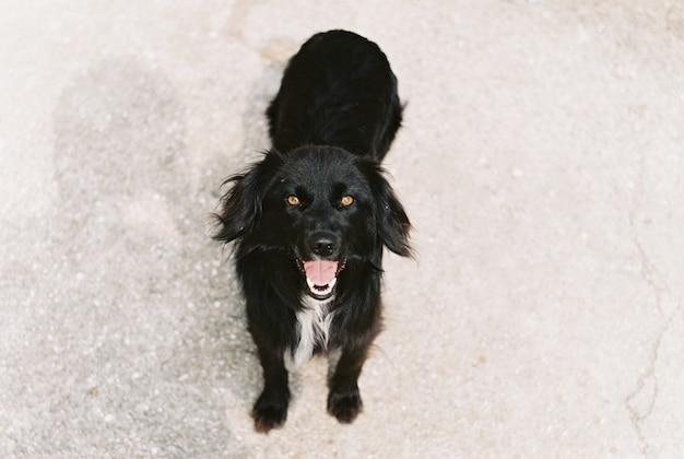 Engraçado cachorro preto.