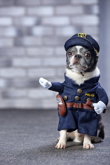 Engraçado chihuahua em traje de policial.
